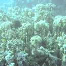 dahab-islands-15