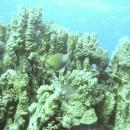dahab-islands-41
