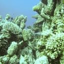dahab-islands-42