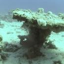 dahab-islands-81