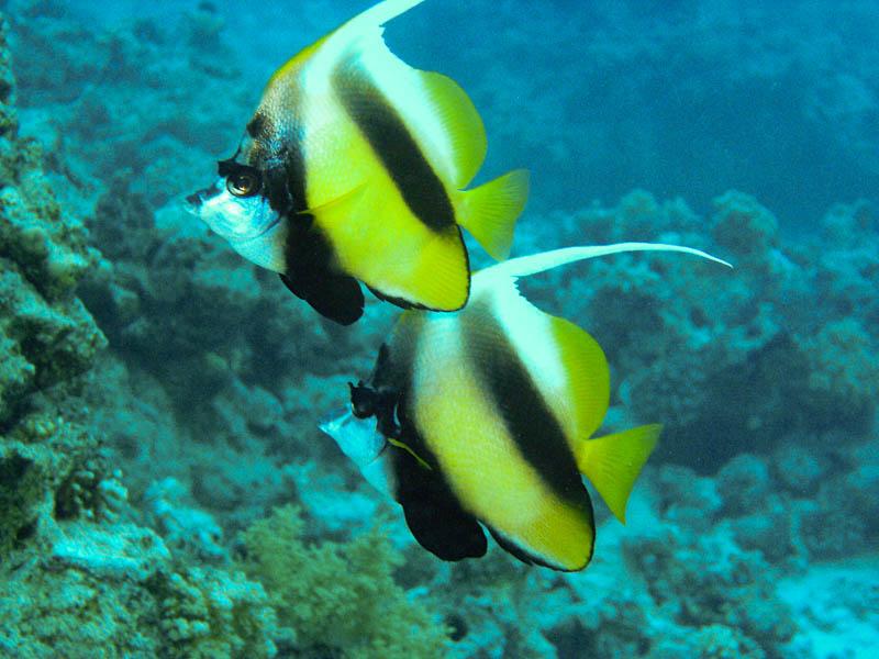 Nurkowanie w Sharm El Sheikh, Ela Benducka