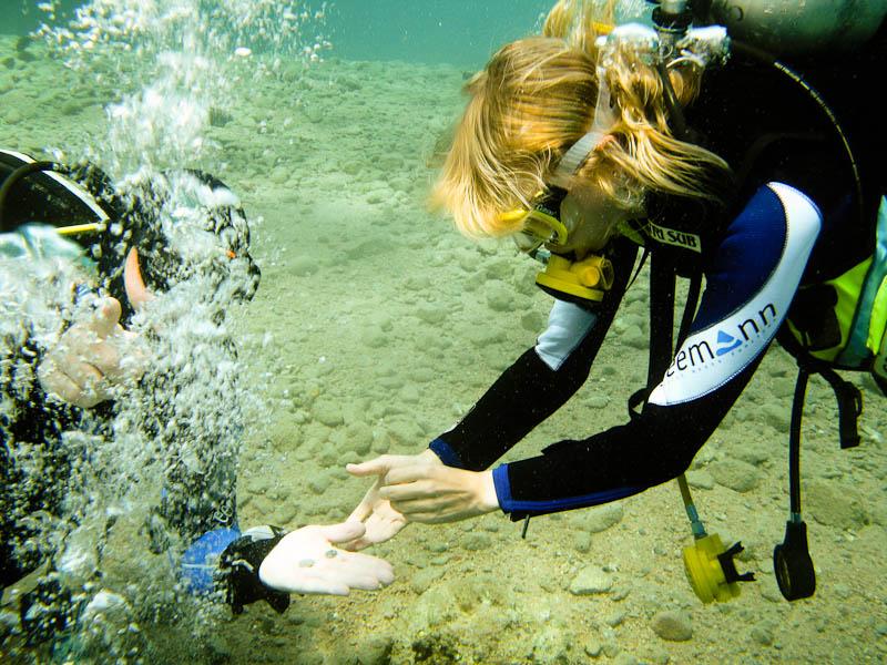 Kurs nurkowania prowadzony przez Ela Benducka w Dahab, Egipt